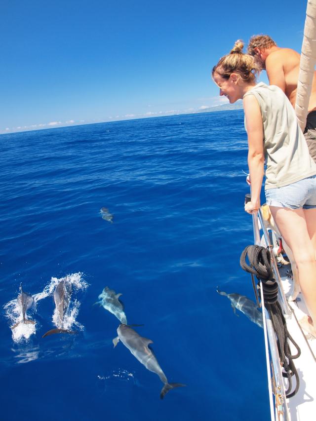 dauphin reduite